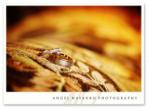 Picture of the wedding rings. Sarasota - The Field Club